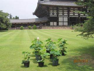 tempio-a-nara