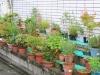 bonsai-fuori-dalle-case