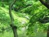 tokyo-giardino-airone